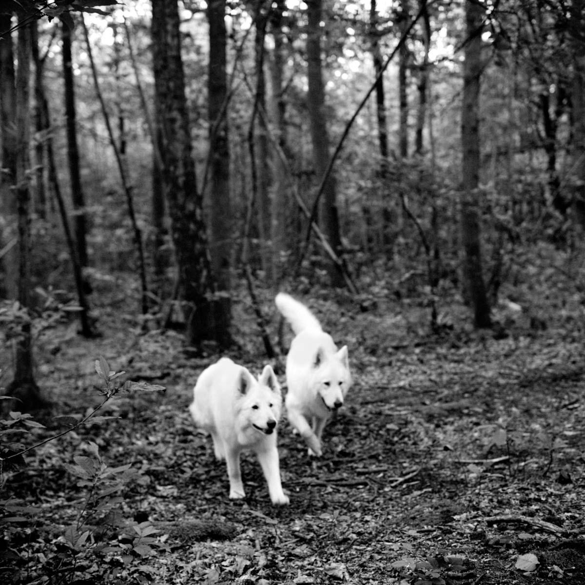 The-Forest-Magazine_Linda-Tuloup_Elisa-Meliani_0002